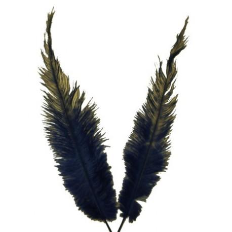 Plumas Aves Pequeñas